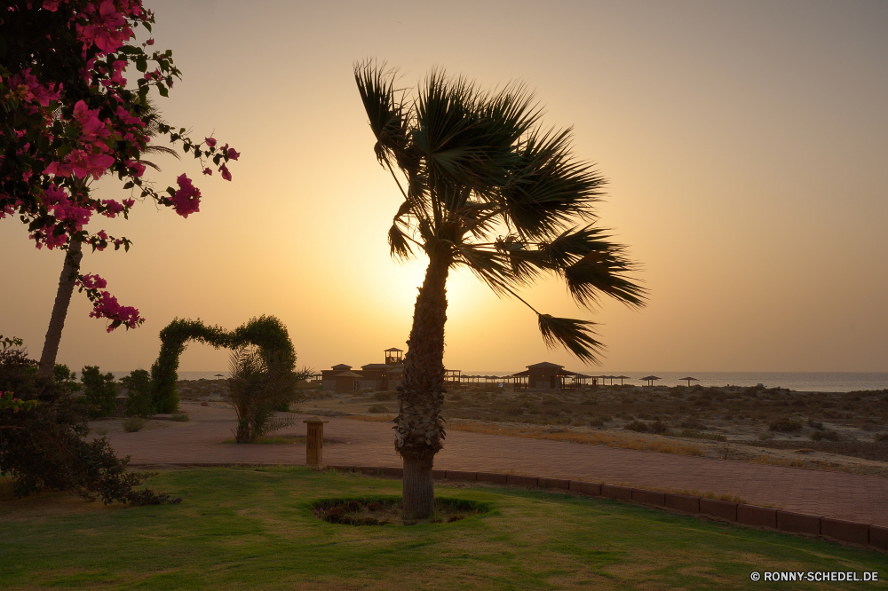 Lahami Bay Beach and Garden Resort Baum Strand woody plant Palm Ozean Himmel Tropischer Meer Kokosnuss Sand vascular plant Insel Urlaub Reisen Landschaft Sonnenuntergang Wasser Paradies Sonne cabbage tree Bäume Sommer Horizont Küste Entspannen Sie sich Urlaub Ufer Pflanze Tourismus Wolke landschaftlich Resort Wolken friedliche seelandschaft im freien Bucht Entspannung ruhige Ziel exotische Szenerie idyllische Kontur Ruhe Dämmerung Küste Wendekreis natürliche Sonnenaufgang sonnig Yucca Szene Türkis Gras 'Nabend warm entspannende echte Lorbeer klar Frieden heiß Tropen Strauch Welle am Meer Feld Reflexion Morgenröte Pazifik Beleuchtung Reise Park im freien romantische Sonnenlicht Palmen Handflächen bunte außerhalb Klima gelassene Kiefer Orange Farbe Tourist Sonnenuntergang Apparat Schwimmen Erholung Nacht Saison niemand tree beach woody plant palm ocean sky tropical sea coconut sand vascular plant island vacation travel landscape sunset water paradise sun cabbage tree trees summer horizon coast relax holiday shore plant tourism cloud scenic resort clouds peaceful seascape outdoor bay relaxation tranquil destination exotic scenery idyllic silhouette calm dusk coastline tropic natural sunrise sunny yucca scene turquoise grass evening warm relaxing true laurel clear peace hot tropics shrub wave seaside field reflection dawn pacific lighting trip park outdoors romantic sunlight palm trees palms colorful outside climate serene pine orange color tourist sundown apparatus swim recreation night season nobody