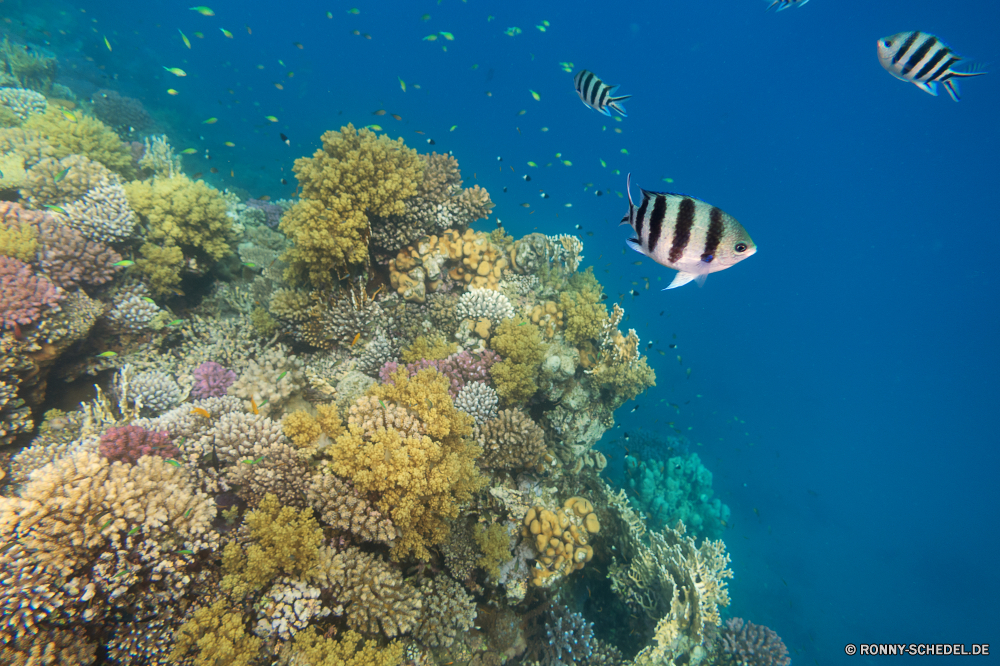 Lahami Bay Coral reef Riff Grat Unterwasser Fisch Koralle Meer natürliche Höhe Ozean Tauchen Tropischer Wasser aquatische Marine Salzwasser Tier Tauchen Tauchgang exotische geologische formation Sonnenlicht Sonne Reisen Kolonie Sonnenstrahl tief bunte Taucher erkunden hell Exploration Tourismus unter unter Leben Strahlen Urlaub Strahl seelandschaft Blasen Traum Orte Entspannung Unterwasser Farbe Licht 3D unter Scuba diving Schule nass Tiefe Sonnenschein unter Wasser Fische Scuba diver Oberfläche welligkeit Sommer weiche Sonnenstrahlen Salz Aquarium gelassene See Landschaft Szenen Baum Schwimmen Raum Ruhe Wildtiere Urlaub ins Rollen klar Ruhe gerendert ruhige frisch transparente Kopie coral reef reef ridge underwater fish coral sea natural elevation ocean diving tropical water aquatic marine saltwater animal scuba dive exotic geological formation sunlight sun travel colony sunbeam deep colorful diver explore bright exploration tourism beneath below life rays vacation ray seascape bubbles dream places relaxation undersea color light 3d under scuba diving school wet depth sunshine submerged fishes scuba diver surface ripple summer soft sunbeams salt aquarium serene lake landscape scenes tree swimming space calm wildlife holiday rolling clear tranquility rendered tranquil fresh transparent copy