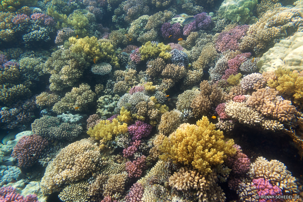 Lahami Bay Coral reef Riff Unterwasser Koralle Fisch Meer Grat Ozean Polyp Tier Tropischer Tauchen Wasser Marine coelenterate natürliche Höhe aquatische Salzwasser Tauchgang Wirbellose Tauchen exotische Reisen Sonnenlicht Kolonie Sonne bunte tief Urlaub Sonnenstrahl geologische formation Exploration Leben erkunden Tourismus Strahlen Strahl unter hell seelandschaft Traum Unterwasser unter Orte Farbe unter Taucher Blasen Entspannung Schwimmen Wildtiere 3D Organismus Scuba diving Aquarium Tiefe Fische nass Salz Oberfläche Sommer Schule Ruhe Licht Anemone unter Wasser Szenen klar welligkeit Sonnenschein Tiere ruhige weiche Sonnenstrahlen ins Rollen gerendert Urlaub gelassene idyllische horizontale See friedliche Kopie atmosphärische Wellen Schnorcheln hilfst du Wild Ruhe Raum Klima dunkel transparente coral reef reef underwater coral fish sea ridge ocean polyp animal tropical diving water marine coelenterate natural elevation aquatic saltwater dive invertebrate scuba exotic travel sunlight colony sun colorful deep vacation sunbeam geological formation exploration life explore tourism rays ray below bright seascape dream undersea beneath places color under diver bubbles relaxation swimming wildlife 3d organism scuba diving aquarium depth fishes wet salt surface summer school calm light anemone submerged scenes clear ripple sunshine animals tranquil soft sunbeams rolling rendered holiday serene idyllic horizontal lake peaceful copy waves atmospheric snorkeling inviting wild tranquility space climate dark transparent